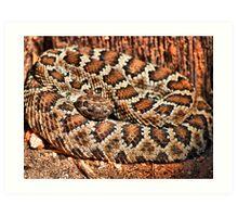 First Wild Rattle Snake Art Print