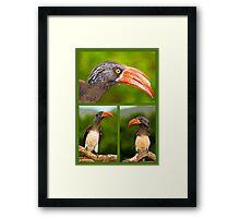 African Hornbill's Framed Print