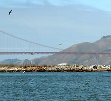Golden Gate Panorama by David Tait