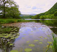 The Lake District: Rydal water Lillies by Rob Parsons