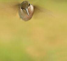 In Flight! by Trudy Wilkerson