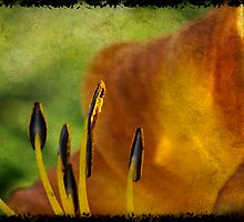 Late Day Lily by Lois  Bryan