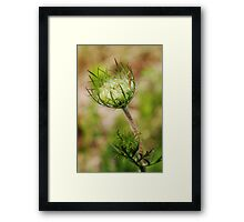 Crown  (from wild flowers collection) Framed Print