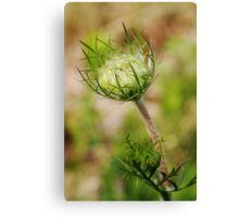 Crown  (from wild flowers collection) Canvas Print