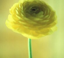 Yellow Flower by theflashbulb
