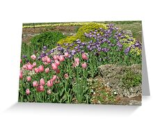 Pink and Purple Tulips II Greeting Card