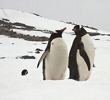 """Gentoo Penguins ~ """"Life in the Freezer"""" by Robert Elliott"""