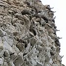 Chalk cliffs and....Seagulls at Flamborough UK by patjila
