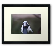 Are You Looking At Me Framed Print
