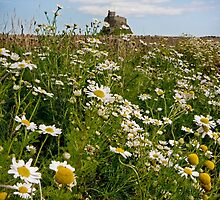 Lindisfarne Castle Daisies by Ritchie Coatsworth