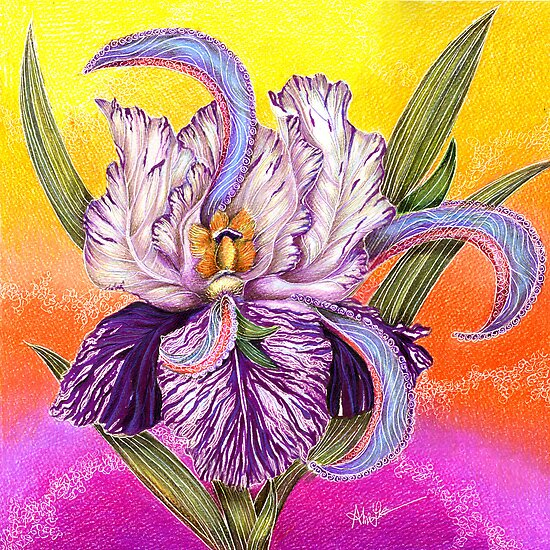The Paisley Iris by Alma Lee