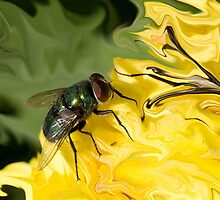 Fly On My paper by Linda Miller Gesualdo