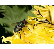Fly On My paper Photographic Print