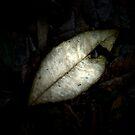 Forest Floor Leaf by FuriousEnnui