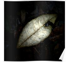 Forest Floor Leaf Poster