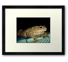 European Common Toad by Poolside At Night Framed Print