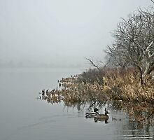 Kent's Pond Fog by Brian Scott