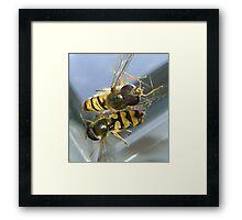 stuck (2 hoverflies) Framed Print