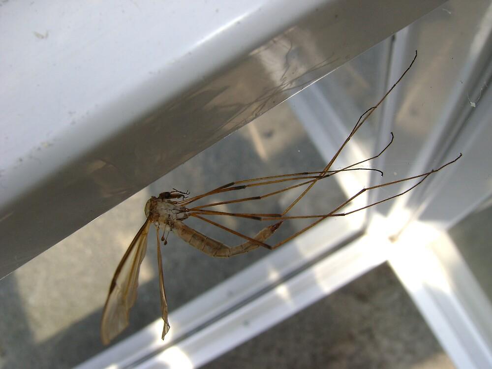 weightless (Cranefly) by armadillozenith