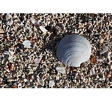 shell, coral beach Photographic Print