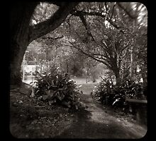 The Path through the viewfinder by ozzzywoman
