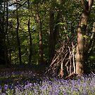 Hidden bluebell wood by Christopher Cullen