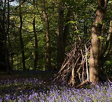 Hidden bluebell wood by Christopher Cullen