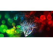 Bare Tree - Dreams of green and red. Photographic Print