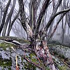 Snowgums by Jenni Tanner