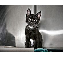 This Is Ethel. How Cute Is She? Photographic Print