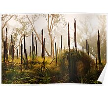 Late Autumn Grass Tree's, Great Ocean Road. Poster