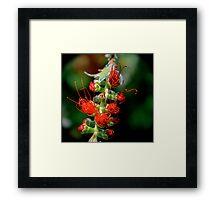 Emerging Bottle Brush Flower Framed Print