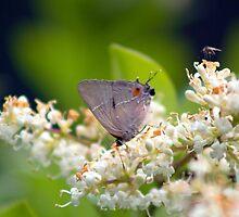 Butterfly Garden by hmclark