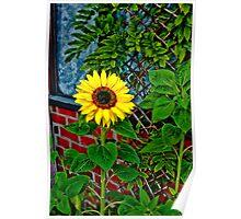 Sunflower in my Garden Poster