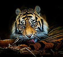 Tiger, Tiger, Burning Bright by Stuart Robertson Reynolds