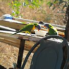Parrots in the Cat Dish by 4spotmore