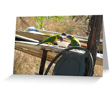 Parrots in the Cat Dish Greeting Card