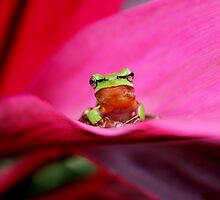 Tropical Frogs by robmac