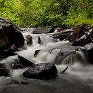 Forest Stream by Ian Benninghaus