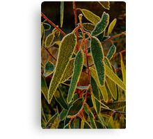"""""""Morning Frost"""" Canvas Print"""