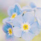 Blue Flower Macro by Nicola  Pearson