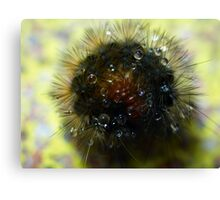 Caterpillar Ball Canvas Print