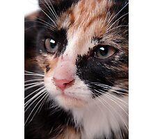 Stray Kitten 2 Photographic Print