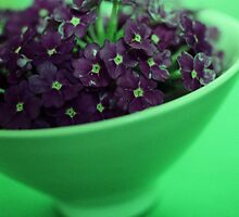 Purple Flowers, Green Bowl by theflashbulb