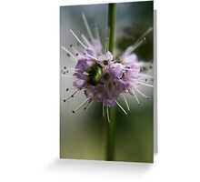 Blossoming mint (from wild flowers collection) Greeting Card