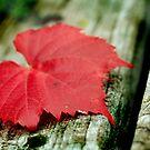 Autumn Texture by Kelvin  Wong