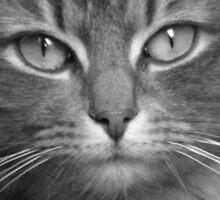 Smokey Eyes (black and white) by Lorna Boyer