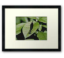 070406-81   GREEN ON GREEN Framed Print