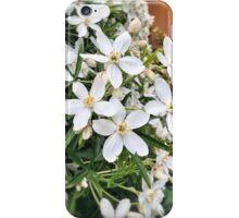Choisya Ternata ~ Aztec Pearl iPhone Case/Skin