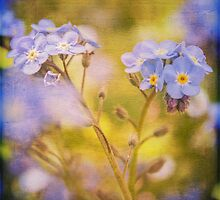 Blue Floral Textured  by Nicola  Pearson